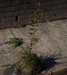 Cocrete and plants