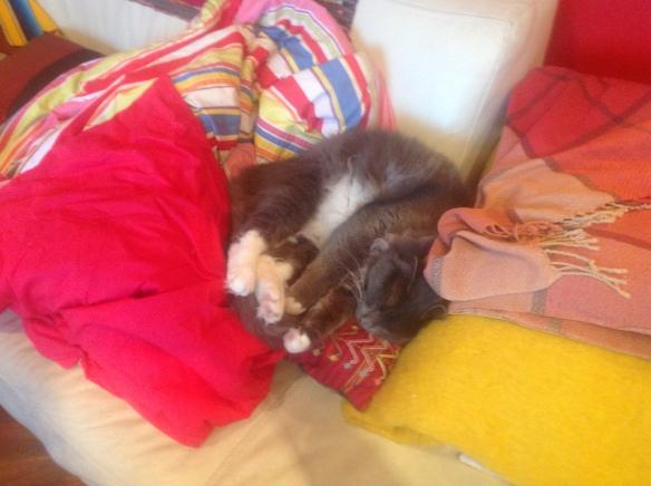 Cosmo catnap