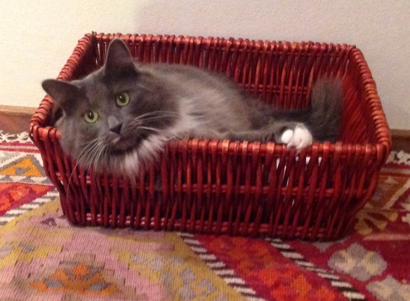 Basket case Cosmo