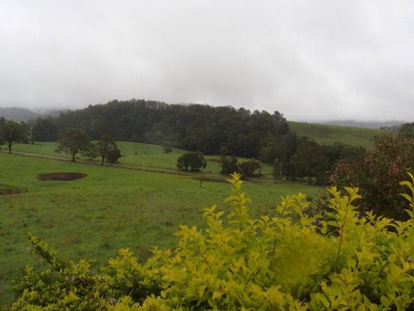 Green hills at Jims